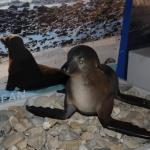 marine-mammal-care_0015
