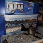 marine-mammal-care_0014