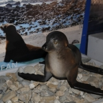 marine-mammal-care_0015