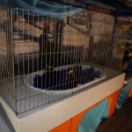 marine-mammal-care_0016