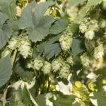 bale-breaker-brewing004