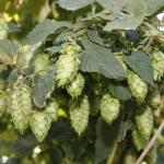 bale-breaker-brewing005