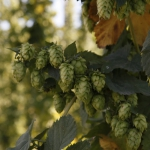 bale-breaker-brewing010